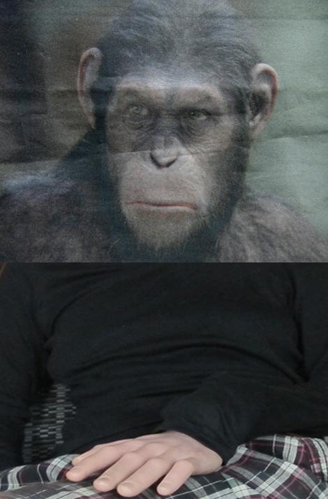 moi-singe